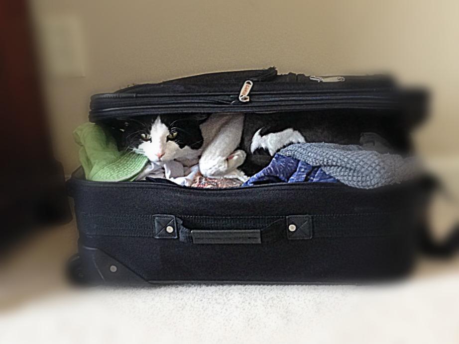 valise-couleur-noire