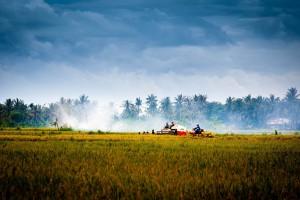 vietnam-countryside-1492029_1280